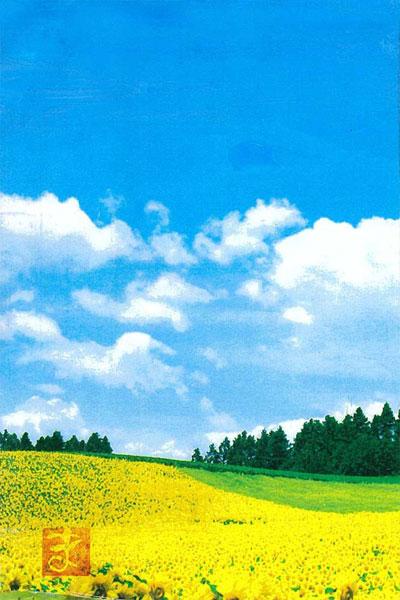 4000403masuko-himawari